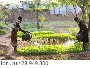 Купить «Kakuma, Kenya - Gardening in Kakuma refugee camp, managed and funded by GIZ / UNHCR.», фото № 28949300, снято 31 августа 2015 г. (c) Caro Photoagency / Фотобанк Лори