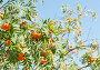 Купить «Ветви с гроздьями спелой рябины солнечным летним днем», фото № 28961592, снято 11 августа 2018 г. (c) Екатерина Овсянникова / Фотобанк Лори