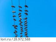 Купить «Pigeons sitting on electric wires», фото № 28972588, снято 13 апреля 2018 г. (c) Валерий Смирнов / Фотобанк Лори