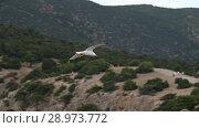 Купить «Seagull flying in the sky», видеоролик № 28973772, снято 10 августа 2018 г. (c) Илья Шаматура / Фотобанк Лори