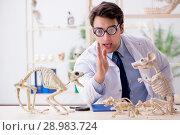 Купить «The funny crazy professor studying animal skeletons», фото № 28983724, снято 7 марта 2018 г. (c) Elnur / Фотобанк Лори