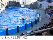 Купить «Dolphin show in the Dolphinarium. Trainers pat and hug dolphins», фото № 28984624, снято 10 июля 2015 г. (c) Евгений Ткачёв / Фотобанк Лори