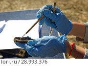 Купить «Археология: расчистка находки,средневековой кости животного», фото № 28993376, снято 6 июля 2018 г. (c) Круглов Олег / Фотобанк Лори
