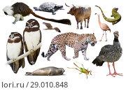 Fauna of South America set. Стоковое фото, фотограф Яков Филимонов / Фотобанк Лори