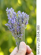 Купить «Bouquet of lavender flowers.», фото № 29034380, снято 7 июля 2018 г. (c) easy Fotostock / Фотобанк Лори