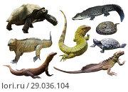 Купить «collection of reptiles», фото № 29036104, снято 20 октября 2019 г. (c) Яков Филимонов / Фотобанк Лори