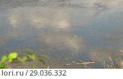 Купить «Polluted river. Rubbish in water. Human activity worsens ecology. Change focus», видеоролик № 29036332, снято 23 февраля 2019 г. (c) Dmitry Domashenko / Фотобанк Лори