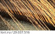Купить «Thin jets water of fountain fly up in the rays of sunset. HD slowmotion x4», видеоролик № 29037516, снято 23 февраля 2019 г. (c) Dmitry Domashenko / Фотобанк Лори