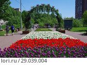 Купить «Тюльпаны в Бабушкинском парке, Москва», фото № 29039004, снято 14 мая 2018 г. (c) Natalya Sidorova / Фотобанк Лори