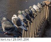 Купить «Pigeons by the river», фото № 29041204, снято 13 ноября 2012 г. (c) Argument / Фотобанк Лори