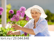 Купить «senior woman with allium flowers at summer garden», фото № 29044848, снято 3 июня 2018 г. (c) Syda Productions / Фотобанк Лори