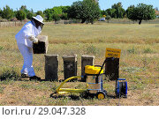 Купить «Beekeeper working. Olivenza. Badajoz province. Extremadura. Spain», фото № 29047328, снято 16 мая 2015 г. (c) age Fotostock / Фотобанк Лори