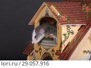 Купить «Curious baby rat», фото № 29057916, снято 24 ноября 2012 г. (c) Argument / Фотобанк Лори