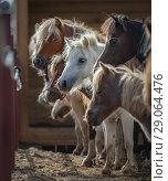 Купить «Табун Американских миниатюрных лошадей в контровом свете», фото № 29064476, снято 21 августа 2018 г. (c) Абрамова Ксения / Фотобанк Лори