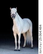 Купить «Светло-соловый жеребец породы Американская миниатюрная лошадь», фото № 29064484, снято 13 июля 2018 г. (c) Абрамова Ксения / Фотобанк Лори