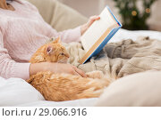 Купить «red cat and female owner reading book at home», фото № 29066916, снято 15 ноября 2017 г. (c) Syda Productions / Фотобанк Лори