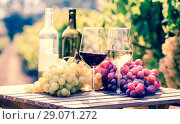 Купить «glasses of red and white wine and ripe grapes on table in vineyard», фото № 29071272, снято 19 октября 2018 г. (c) Татьяна Яцевич / Фотобанк Лори