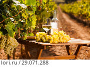 Купить «glass of White wine ripe grapes and bread on table in vineyard», фото № 29071288, снято 19 октября 2018 г. (c) Татьяна Яцевич / Фотобанк Лори