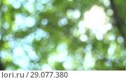 Купить «Swaying in the wind defocused bright summer sunny green background with bokeh and glares. Summer warm afternoon in canopy of trees», видеоролик № 29077380, снято 23 февраля 2019 г. (c) Dmitry Domashenko / Фотобанк Лори