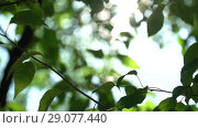 Купить «Camera tilts on defocused bright summer sunny green background with bokeh and glares. Summer warm afternoon in canopy of trees», видеоролик № 29077440, снято 23 февраля 2019 г. (c) Dmitry Domashenko / Фотобанк Лори