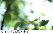 Купить «Camera changing focus in the shade trees. Bright warm summer sunny green background with bokeh and glares», видеоролик № 29077448, снято 23 февраля 2019 г. (c) Dmitry Domashenko / Фотобанк Лори