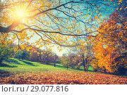 Купить «Sunny autumn in countryside», фото № 29077816, снято 5 октября 2016 г. (c) Sergey Borisov / Фотобанк Лори