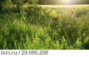 Купить «fragment of beautiful Meadow in the backlight», видеоролик № 29090208, снято 25 июня 2018 г. (c) Володина Ольга / Фотобанк Лори