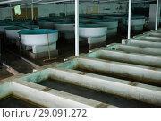 Купить «Tanks and incubators on fish farm», фото № 29091272, снято 4 февраля 2018 г. (c) Яков Филимонов / Фотобанк Лори