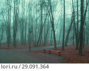 Купить «Autumn park in dense fog - foggy autumn park with fallen autumn leaves and bench near the bare trees», фото № 29091364, снято 8 ноября 2017 г. (c) Зезелина Марина / Фотобанк Лори
