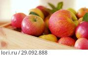 Купить «ripe apples in wooden box on table», видеоролик № 29092888, снято 7 сентября 2018 г. (c) Syda Productions / Фотобанк Лори