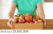 Купить «woman with wooden box of ripe apples», видеоролик № 29092896, снято 7 сентября 2018 г. (c) Syda Productions / Фотобанк Лори