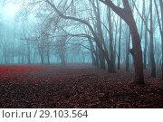 Купить «Autumn gothic landscape - foggy forest with bare trees and fallen red autumn leaves», фото № 29103564, снято 8 ноября 2017 г. (c) Зезелина Марина / Фотобанк Лори