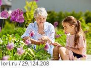 Купить «grandmother and girl seeding flowers at garden», фото № 29124208, снято 3 июня 2018 г. (c) Syda Productions / Фотобанк Лори