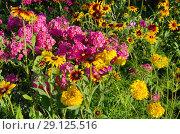Купить «Клумба с красивыми садовыми цветами», фото № 29125516, снято 8 августа 2018 г. (c) Елена Коромыслова / Фотобанк Лори