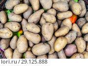 Купить «Young potatoes in a basket. Potato tubers», фото № 29125888, снято 14 сентября 2018 г. (c) Леонид Еремейчук / Фотобанк Лори