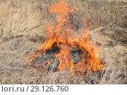Купить «Burning dry grass and reeds», фото № 29126760, снято 23 февраля 2016 г. (c) Леонид Еремейчук / Фотобанк Лори