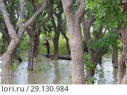 Купить «Fisherman between the mangroves, Tonle Sap lake, Siem reap Province, Kingdon of Cambodia. Kompong Phluk, is one of the more than 170 villages surrounding...», фото № 29130984, снято 23 июля 2018 г. (c) age Fotostock / Фотобанк Лори