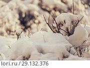 Купить «blur winter background with snow on branches», фото № 29132376, снято 7 февраля 2018 г. (c) katalinks / Фотобанк Лори