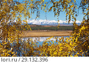 Купить «Autumn picture in the frame of yellow leaves. View of the foothill valley and snow-covered mountains through the branches of birches with yellowed foliage», фото № 29132396, снято 22 сентября 2018 г. (c) Виктория Катьянова / Фотобанк Лори
