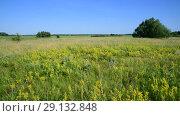 Купить «wild meadow with different herbs in European part of Russia», видеоролик № 29132848, снято 22 июня 2018 г. (c) Володина Ольга / Фотобанк Лори