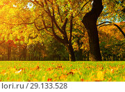 Купить «Fall picturesque landscape. Fall trees with yellowed foliage in sunny October park lit by sunlight», фото № 29133528, снято 3 октября 2016 г. (c) Зезелина Марина / Фотобанк Лори