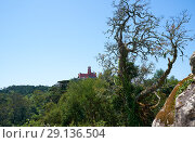 Купить «Pena Palace on the top of Sintra Mountains as seen from the Moorish castle. Sintra. Portugal», фото № 29136504, снято 3 июля 2016 г. (c) Serg Zastavkin / Фотобанк Лори