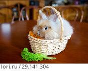 Купить «Кролик в корзинке и лист салата», фото № 29141304, снято 23 сентября 2018 г. (c) Юлия Кузнецова / Фотобанк Лори