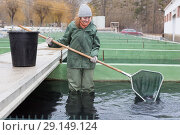 Купить «Female standing in fish tank fishing for sturgeon with landing net», фото № 29149124, снято 4 февраля 2018 г. (c) Яков Филимонов / Фотобанк Лори