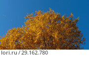 Купить «Autumn trees with yellowing leaves against the sky», видеоролик № 29162780, снято 29 сентября 2018 г. (c) Игорь Жоров / Фотобанк Лори
