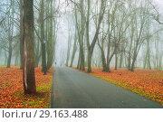 Купить «Fall landscape. Foggy fall park alley with bare autumn trees and fallen colorful red leaves», фото № 29163488, снято 8 ноября 2017 г. (c) Зезелина Марина / Фотобанк Лори