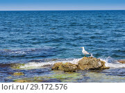 Seagull by the sea. Seascape with a seagull standing on the coastal stone. Tidal bore (2018 год). Стоковое фото, фотограф Вадим Орлов / Фотобанк Лори