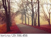Купить «Fall landscape - mysterious fall park alley with bare fall trees and dry fallen orange leaves in the fog», фото № 29186456, снято 8 ноября 2017 г. (c) Зезелина Марина / Фотобанк Лори