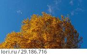 Купить «Autumn trees with yellowing leaves against the sky», видеоролик № 29186716, снято 29 сентября 2018 г. (c) Игорь Жоров / Фотобанк Лори