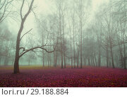 Купить «Autumn nature forest landscape - foggy autumn view of autumn park in dense autumn fog», фото № 29188884, снято 8 ноября 2017 г. (c) Зезелина Марина / Фотобанк Лори